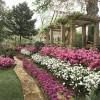 azalea-garden